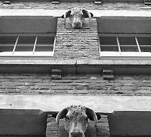 Bull by maxwell78