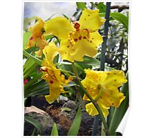 Scolding Yellow Orchid Poster