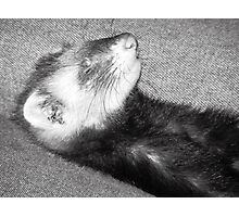 Ferret Photographic Print