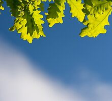 Bunch of green young oak leaves by Arletta Cwalina