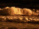 Amber Waves by Sandy Keeton
