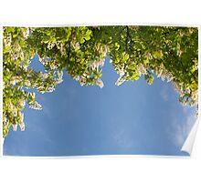 View at bright flowers of Aesculus Poster