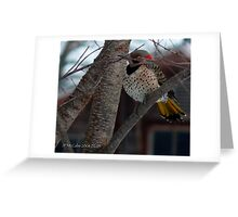 Wood Pecker, Flicker takes a quick nap! Greeting Card