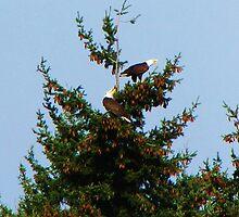 Screaming Eagles by Chuck Gardner