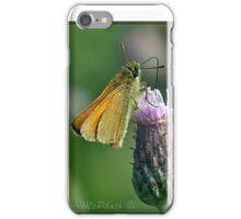 Essex Skipper (Thymelicus lineola) (II) iPhone Case/Skin