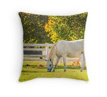 Slovenia, Lipica, Lipizzan Horse Throw Pillow
