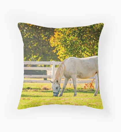 Slovenia, Lipica, Lipizzan Horse Throw Pillow