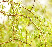Willow Salix Alba tree detail by Arletta Cwalina
