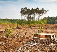 Woods lone trunk in deforestation by Arletta Cwalina