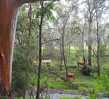 Cows on the other side of the creek. Gordon Country Qld Australia by Marilyn Baldey