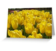 Bright Sunny Yellow Tulips Greeting Card