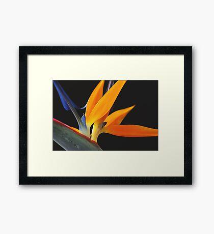 Paradise Orange Framed Print