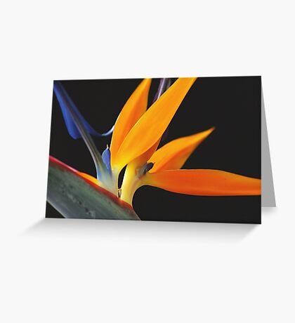 Paradise Orange Greeting Card