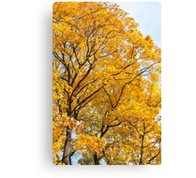 Yellow leaves autumn trees Canvas Print