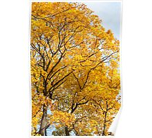 Yellow leaves autumn trees Poster