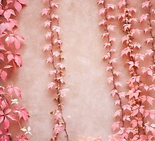 Red leaves of parthenocissus quinquefolia by Arletta Cwalina