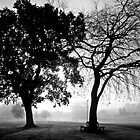 foggy duo by dinghysailor1