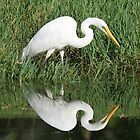 Egret Reflection by Phillip Weyers