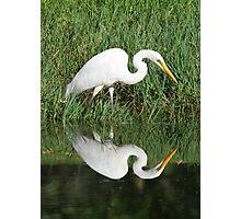 Egret Reflection Photographic Print
