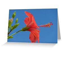 Blue Sky And Hibiscus Greeting Card