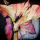 Amaryllis by Susan Duffey
