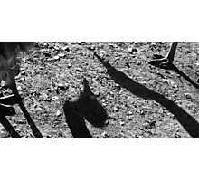Shadows Photographic Print