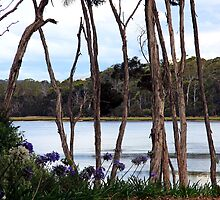 The River - Blackwall, Tasmania by Ruth Durose