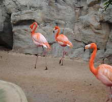 Flamingos by franceslewis