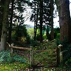 Gate in the trees by andymcgeechan