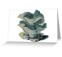 Antique Sea Coral Illustration Greeting Card