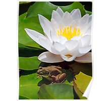 White Water Lily with Frog Poster