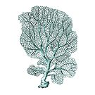 Antique Sea Coral Fan Illustration by surgedesigns