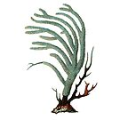 Antique Sea Coral Illustration by surgedesigns