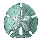 Antique Sea Sand Dollar Illustration by surgedesigns