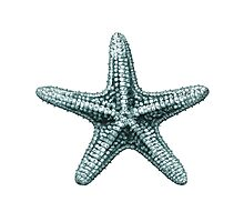 Antique Sea Starfish Illustration Photographic Print