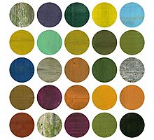 Rustic Rounds 6.0 Photographic Print