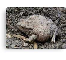 Brown Toad Canvas Print