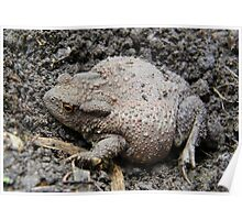 Brown Toad Poster