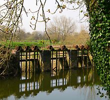 sluice gate on the river Stour, by Fiddleford Mill by naturalimages