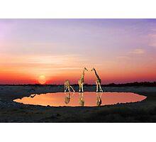 SUNSET WITH GIRAFFES 2 Photographic Print