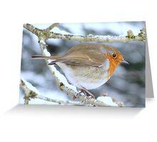 A Robin Greeting Card