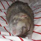 Ratty Whirl by KanaShow