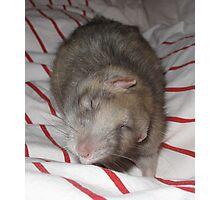 Ratty Whirl Photographic Print