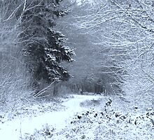 Snow at Havant Thicket by Sharon Perrett