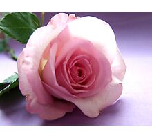 A Rose's Kiss Photographic Print