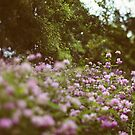 Among The Wildflowers by ALICIABOCK