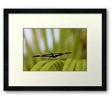 Butterfly Plane Framed Print