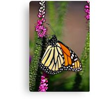 SUMMERS PREVIEW Canvas Print
