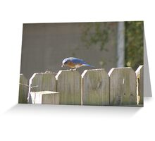 Bluebird Nugget for Breakfast Greeting Card