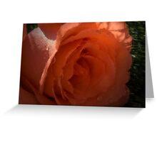 Peach beauty Greeting Card